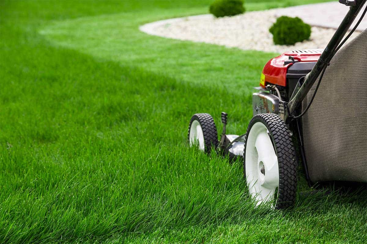 Yard Maintenance Services | Lawn Care | Landscape Maintenance Camas WA